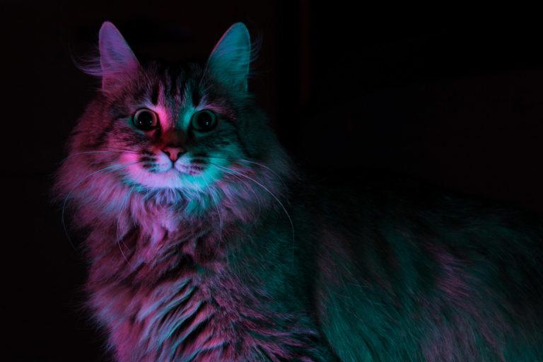кошка Плотва