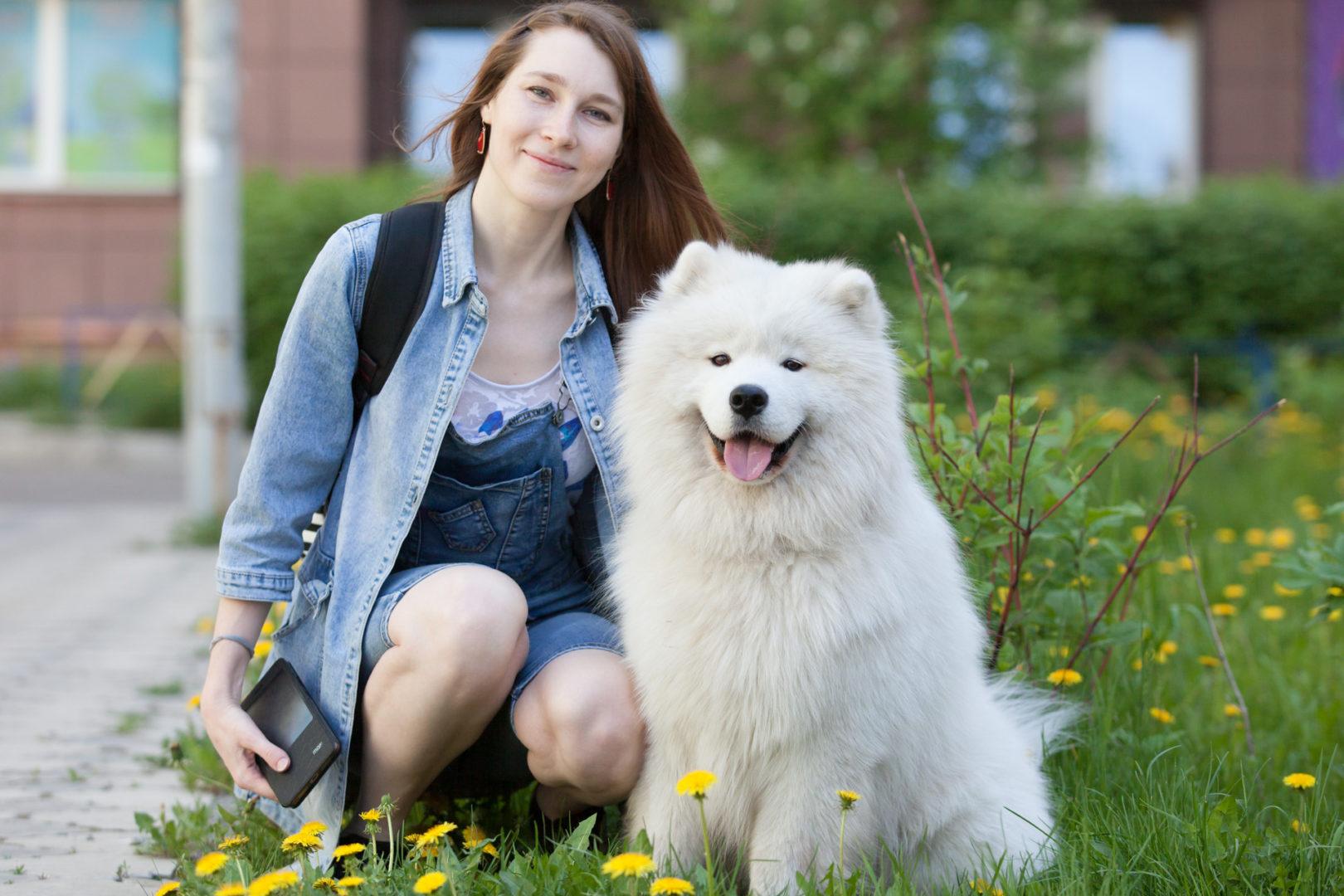 фотосессии с самоедской собакой